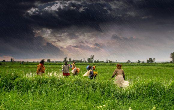 Budget Failures for Farmers