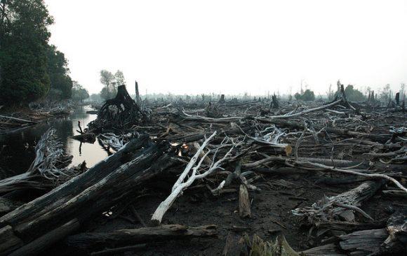 Peatland Restoration Agency Activities