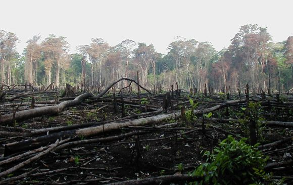 Land-use Practices in the Amazon