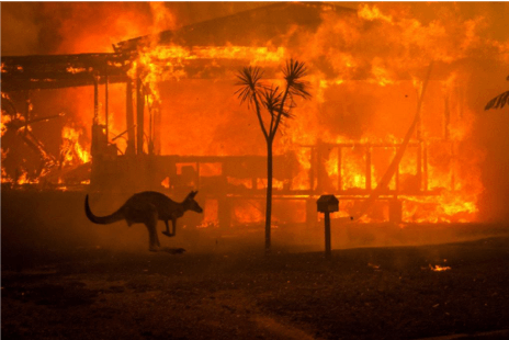 Australia's Summer of Bushfire Disaster