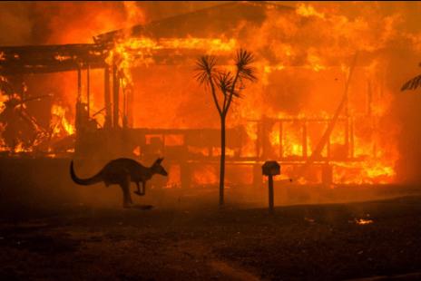 Australia's Summer of Bushfire Disaster