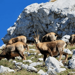 Land Being Lost to Urbanization: A Threat to Biodiversity in Italy