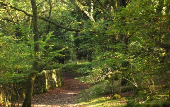Ancient Woodlands, the Most Biodiverse Area in the UK Covers Only 2.4% of Land Area and Needs Protection