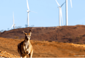 CSIRO and ARENA Leading Climate Mitigation Research in Australia